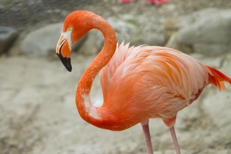 静岡市立 日本平動物園|動物紹介