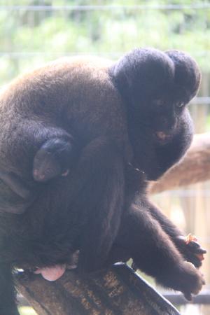 静岡市立 日本平動物園|飼育日...