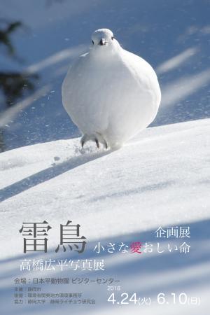 2018.04.24〜2018.06.10「雷鳥 小さな愛おしい命」高橋広平写真展を開催します!